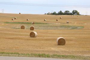 fields-saskatchewan