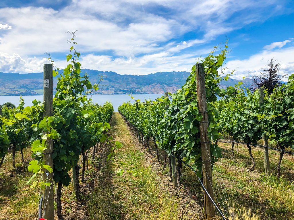 Best Okanagan Wineries: The Ultimate Okanagan Valley Wine Tasting Tour! Find out all the best wineries and vineyards to visit on your next trip to the Okanagan Valley. Wineries in Kelowna, Lake Country, Naramata Bench, Osoyoos, Oliver, Peachland, Penticton, Skaha Bench and more. Wineries to visit, places to stay and great ideas for your wine vacation. #okanagan #bcwines #wine #vineyards #explorebc #wineries